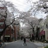 駅まで桜並木