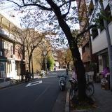 紅葉した桜並木